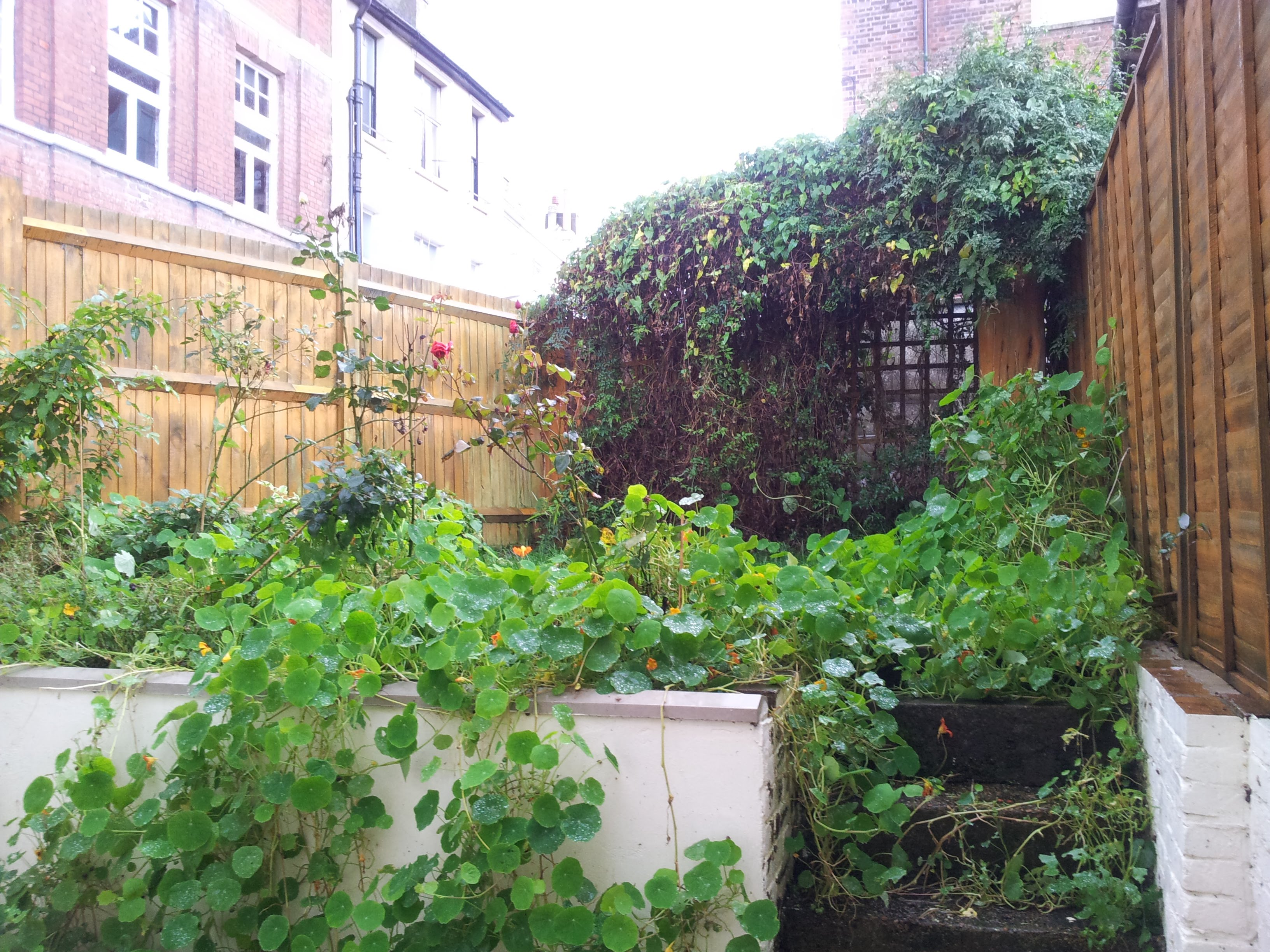A Garden Clearance In Hastings Town Center And Replant
