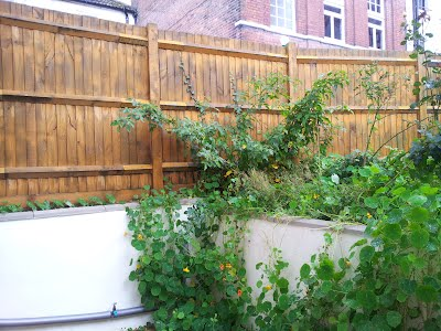 A Garden Clearance In Hastings Town Center And Replant Jeffery